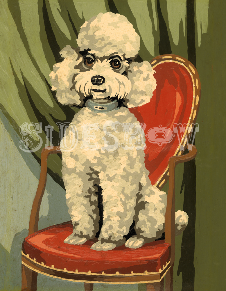Poodle red chair