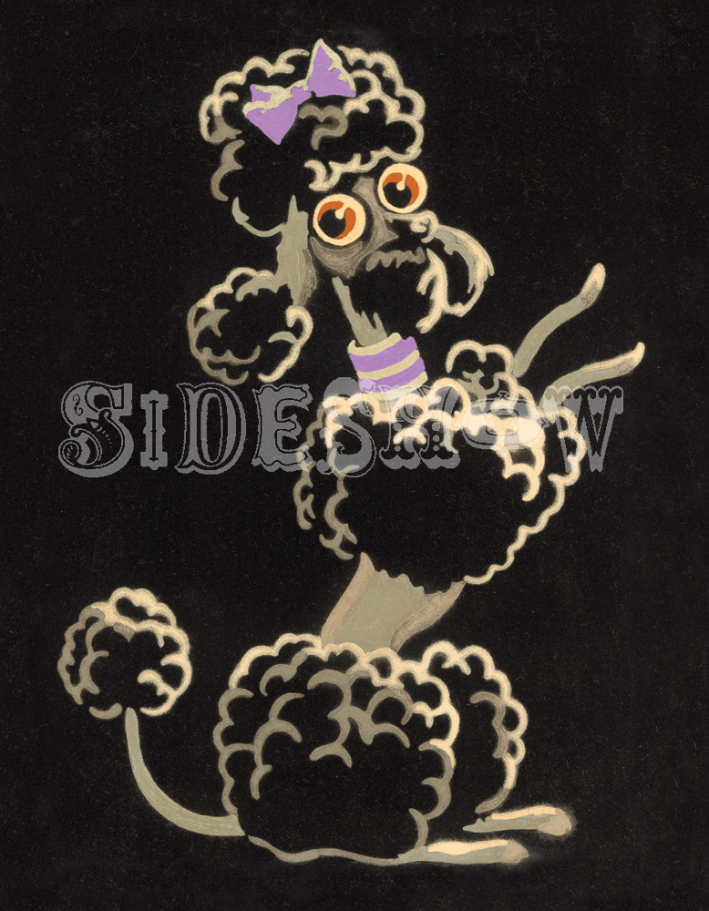 Purple Poodle