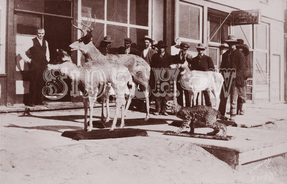 stuffed animals saloon vintage photo