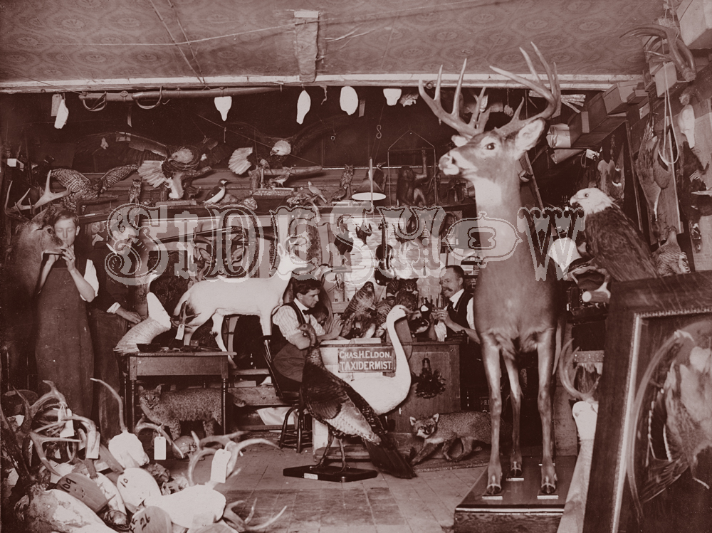 taxidermist vintage photo