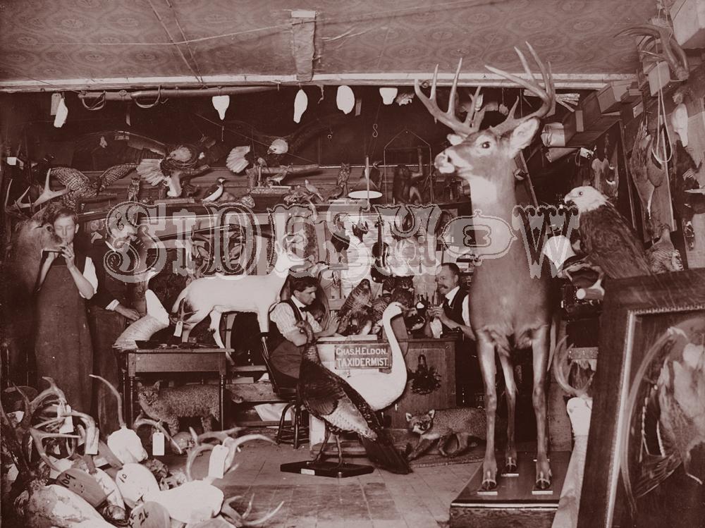 taxidermist vintage photo