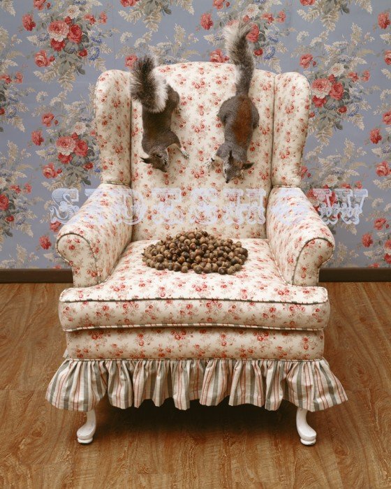 Squirrels on a Chair